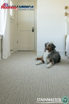 Chase's patterned loop layers give just the movement you need to keep things interesting, and since it's made with STAINMASTER® PetProtect® carpet you can make sure any dirt tracked inside won't stop the game of fetch in its tracks. | Featured: Chase in Briarwood. #andersontuftex #carpet #flooring #doglife . #Florida #home #flooring #flooringinstallation #spacecoast #design #interiordesign #melbournebeach #indialantic #satellitebeach #indianharbourbeach #viera #cocoabeach #merrittisland