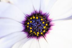 Hello Daisy by Thanasis Maikousis on 500px