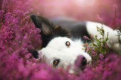 Lovely Dog Portraits By Photographer Alicja Zmyslowska