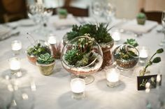 Viansa Winery succulent wedding reception table theme by Sonoma wedding photographer, Tinywater Photography