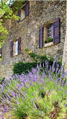 Lavender Cottage, Lavender Garden, Lavender Fields, Lavander, French Lavender, French Farmhouse Decor, French Country House, Country Life, French Cottage Garden