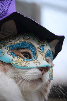 Gatito con antifaz elegante.