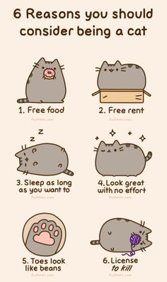 Pusheen The Cat. LOL toes look like beans lolol Crazy Cat Lady, Crazy Cats, I Love Cats, Cute Cats, Funny Kitties, Chat Pusheen, Pusheen Book, Pusheen Stuff, Pusheen Plush