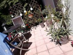 Ogród uwielbiam