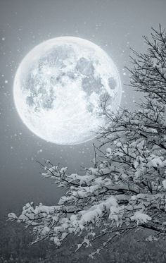 Winter Moon ~~ Moon light by Lupone Giovanna on Moon Moon, Big Moon, Luna Moon, Snow Scenes, Winter Scenes, Ciel Nocturne, Winter Wonderland Christmas, Prim Christmas, Christmas Ideas