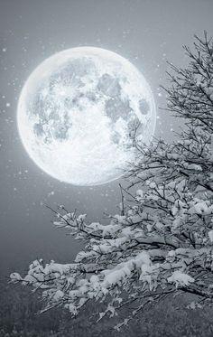 Winter Wonderland Christmas Snowy moon One of the last things Lori saw