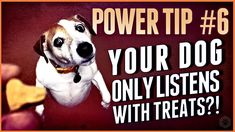 How to get rid of lures, even if your dog only listens with treats! Puppy Training Tips, Dog Training Videos, How To Get Rid, Dogs And Puppies, Your Dog, Treats, Youtube, Sweet Like Candy, Goodies