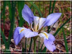 Mois de Février... le printemps est déjà en Provence...    http://mistoulinetmistouline.eklablog.com/