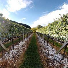 O Vale dos Vinhedos é uma região da Serra Gaúcha, cuja maior parte de sua área pertence ao município de Bento Gonçalves (RS). Os vinhos produzidos no vale são os únicos do país a apresentar o selo de indicação de procedência (desde 2002) e o de denominação de origem (desde 2011), que são garantias de qualidade dos vinhos ali produzidos. Foto: @douglasdbs