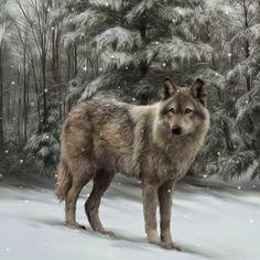 Mes créations PPS: Photos de loups