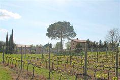 #farminChianti  for wine and oil