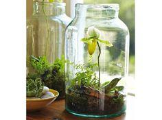 DIY : terrarium dans un bocal