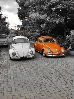 Beetle 1960