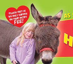 Visit Cornwall's Happiest Donkeys