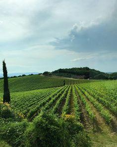 regram @radinah Postcard from Italy  #vsco #tuscany #toscana #italy #siena #vineyards #countryside