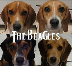 The Beagles  See what I did there?? :P