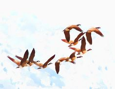 geese watercolor - Google Search