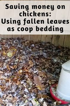 Raising Backyard Chickens, Cute Chickens, Chicken Story, Chicken Pictures, Guinea Fowl, Chicken Humor, Fallen Leaves, Autumn Leaves, Coops