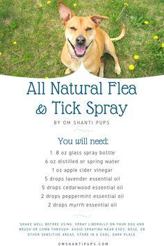 Essential Oils For Fleas, Cedarwood Essential Oil, Young Living Essential Oils, Flea Spray For Dogs, Flea And Tick Spray, Flea Remedy For Dogs, Dog Bug Spray, Dog Flea Remedies, Doterra