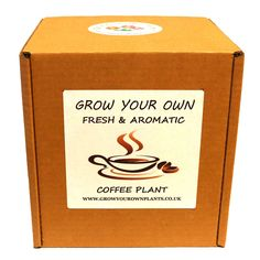 Grow Your Own Coffee Plant Kit - Planting kit for children and adults Coffea Arabica, Small Shrubs, Coffee Plant, Garden Gifts, Grow Your Own, Planting, Fathers Day, Kit, Children