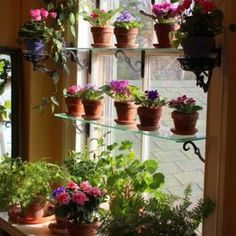 Even in winter we can still grow fresh herbs. In most regions the herb garden is now dormant, but with a little planning you can grow many culinary herbs indoors this winter. An indoor herb garden is not only functional,… Continue Reading → Indoor Mini Garden, Indoor Window Garden, Window Greenhouse, Herb Garden, Home And Garden, Inside Garden, Jardin Decor, Window Plants, Plant Window Shelf