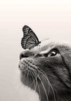 Photography - Black and White | Cat Butterfly by Dorien Soyez on 500px