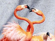 28 Pictures Of Animals Kissing That Will Brighten Up Your Day16