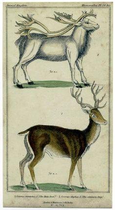Vintage Printable at Swivelchair Media - Beta | Animal – Deer and related