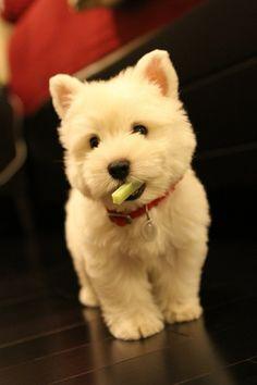 A dog holding something