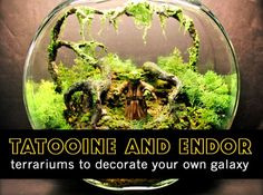 Miniature Star Wars Terrariums Bring Far Away Galaxies Into Your Home!