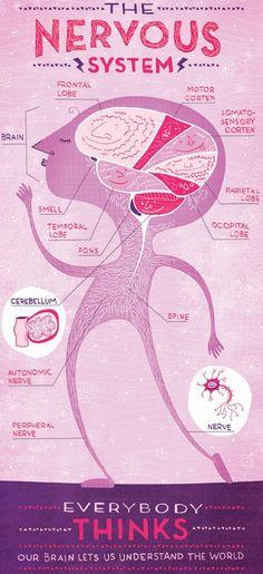 Posters designed by Rachel Ignotofsky facilitate the task of explaining the human body!  http://catracalivre.com.br/geral/educacao-3/indicacao/designer-cria-infograficos-para-ensinar-anatomia-a-criancas/