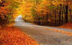 Imagini pentru autumnal wallpaper