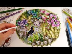 Magical Jungle: The Toucan - Part 2 | Coloring With Colored Pencils - YouTube