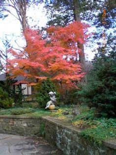Fall in Skylands Manor October 2011