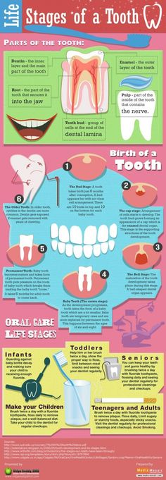 Infographic: Life Stages of a Tooth  #LifeCycle #Teeth