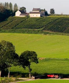 Apostelhoeve, Maastricht (Netherlands). Maastricht's most famous and arguably most beautiful vineyard, just outside the city