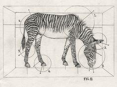 Zebra crate   Flickr - Photo Sharing!