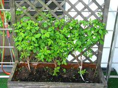 Sichtschutz Im Topf / Container Aus Weide - Balkon | Traumhäuser ... Balkon Pflanzen Blumen Sichtschutz
