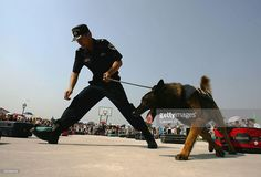 A Chinese Customs official and his drug sniffer dog demonstrate how to detect drugs in suitcases during an open day at a drug dog sniffer training base which is part of China's Customs Anti-Smuggling Office on June 18, 2005 in Beijing. The base trains dogs to detect drugs including marijuana, hashish, heroin, cocaine, opium and methamphetamine hidden in cars and bags.