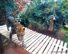 johannesburg zoo - Google Search Google Search