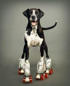 Perros+Patines+Cámara en mano ⛸ (falta la música de algún musical, mi amorito y listo....) = a felicidad total!