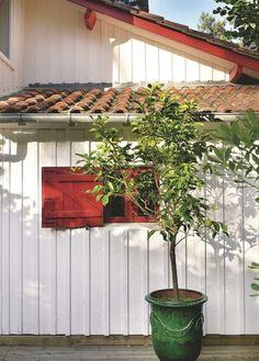 Un citronnier pour parfumer le patio - Joyeuse maison au Cap Ferret - CôtéMaison.fr
