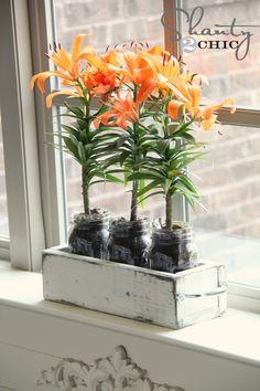 This planter box could hold more than plants in its mason jars. Think tablewear, or maybe desktop supplies....