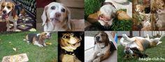 Beagle Halloween 2013 – Facebook borítókép:   http://beagle-club.hu/cikkek/beagle-halloween-2013-facebook-boritokep/