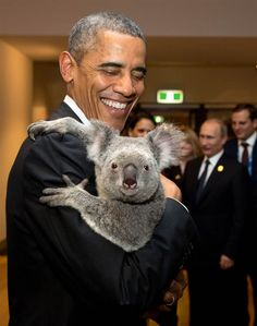 Nov - Australia brings 'Koala Diplomacy' A cuddly and fuzzy welcome for the world's most powerful leaders at the summit in Brisbane,Australia. President Barack Obama cuddling a furry grey iconic marsupial named Jimbelung the Koala Bear. Greatest Presidents, American Presidents, Us Presidents, American History, Michelle Obama, Presidente Obama, Barack Obama Family, Obamas Family, The Wombats