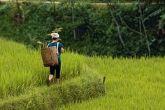Naturschutzgebiet Pu Luong