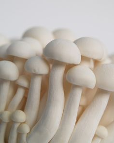 Bunapi mushrooms, known in English as the White Beech or White Clamshell Mushroom.