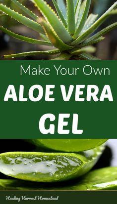 aloe vera uses benefits of - aloe vera uses . aloe vera uses for hair . aloe vera uses for men . aloe vera uses skincare . aloe vera uses juice . aloe vera uses benefits of . aloe vera uses diy . aloe vera uses weights Natural Health Remedies, Natural Cures, Natural Healing, Herbal Remedies, Natural Treatments, Cold Remedies, Holistic Healing, Bloating Remedies, Natural Foods