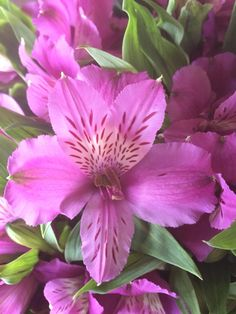 Wonderful #alstroemeria #reno #purple #wandinvalleyflowers