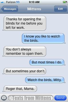 Texts from Mittens - NEW Daily Texts from Mittens: The Blinds Edition ...